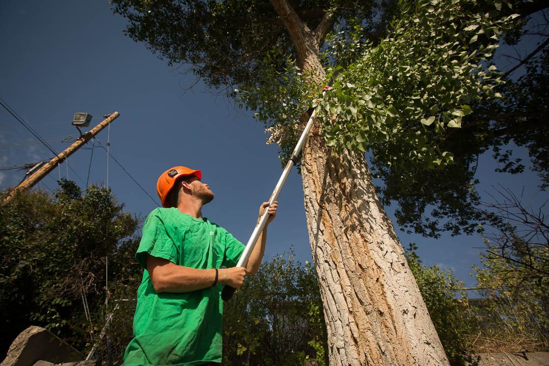 branch-trim-long-stick